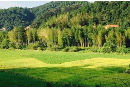 明溪县盖洋镇盖洋村山场森林资源资产556亩