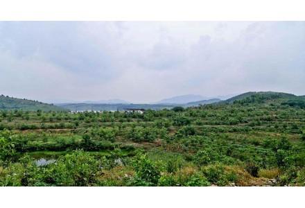 湖北随州600亩水库上游林地转让